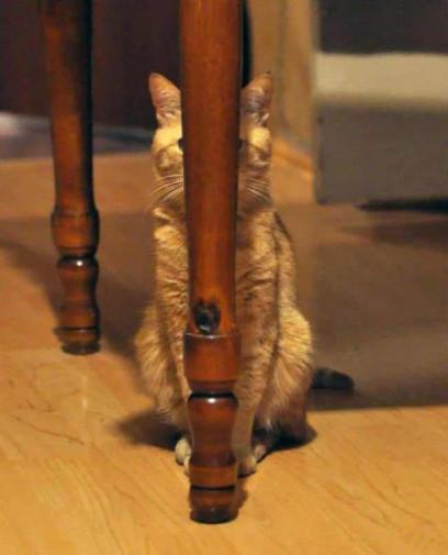 Aceste pisici sunt sigure că s-au ascuns perfect vizualizări