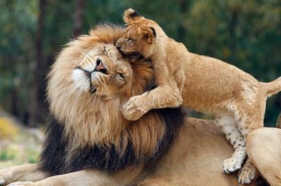 O selecție de imagini uimitoare de animale sălbatice făcute în cel mai potrivit moment vizualizări