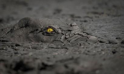 Cele mai bune fotografii ale faunei sălbatice din 2020