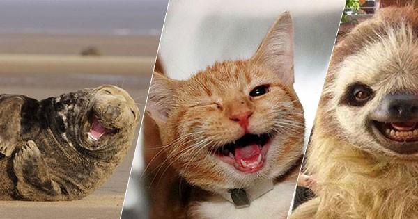 Animale care zâmbesc pentru a-ți face ziua mai veselă #1 vizualizări