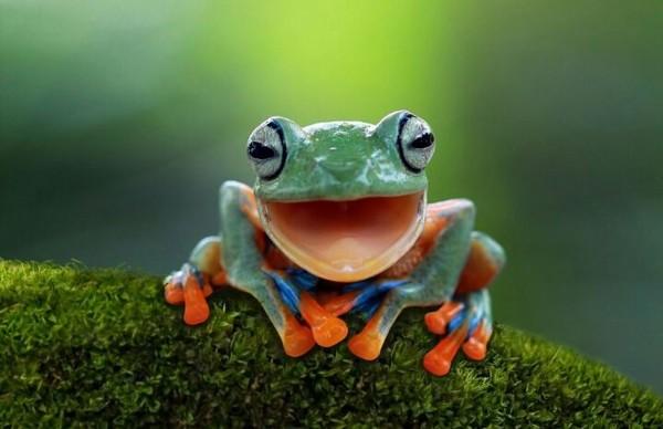 Animale care zâmbesc pentru a-ți face ziua mai veselă #2 vizualizări