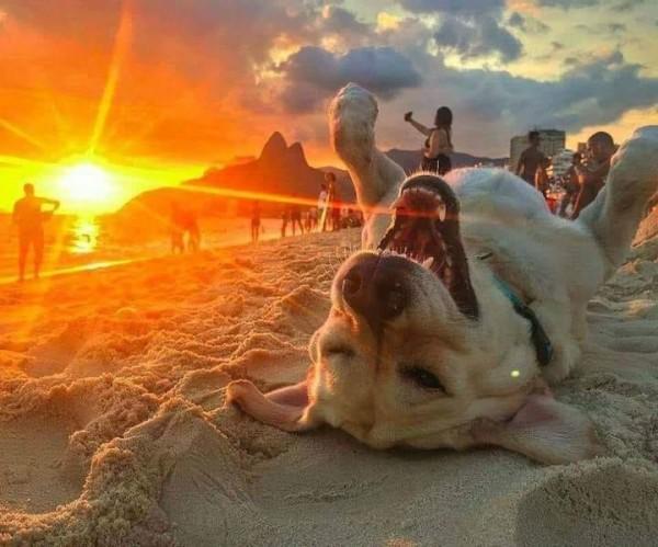 Zâmbetul din inimă este o rază de soare în viața noastră vizualizări