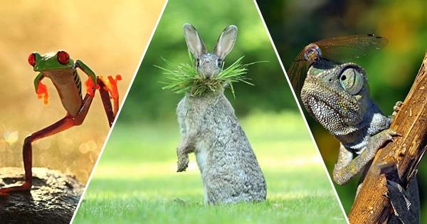 Cele mai amuzante imagini - competiția fotografică The Comedy Wildlife Photography Awards vizualizări